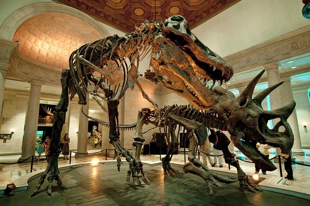 Natural History Museum: Dinosaur Skeletons